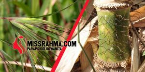 bulu perindu bambu